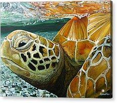 Turtle Me Too Acrylic Print by Jon Ferrentino