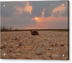 Turtle Of The Apocolypse Acrylic Print by Joshua House
