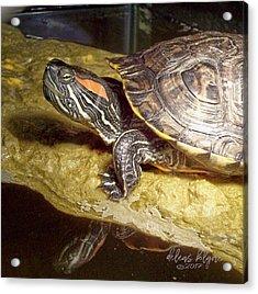 Turtle Reflections Acrylic Print