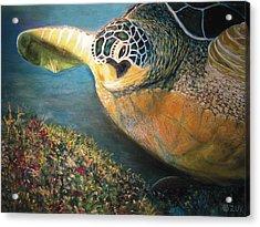 Turtle Run Acrylic Print