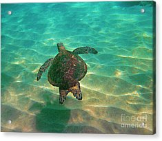 Turtle Sailing Over Sand Acrylic Print