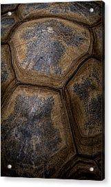 Turtle Shell Acrylic Print by Racheal  Christian