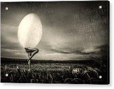 Turtle Thinks It Strange Acrylic Print by Bob Orsillo
