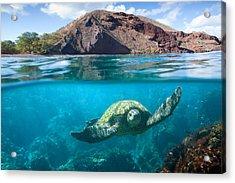 Turtle Town Acrylic Print