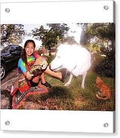 Turtle Turtle, Cat, Dog, Colors Acrylic Print