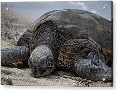 Acrylic Print featuring the photograph Turtle Up Close by Pamela Walton