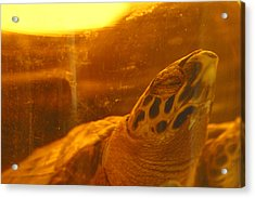 Turtled Acrylic Print by Jez C Self