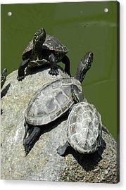 Turtles At A Temple In Narita, Japan Acrylic Print
