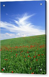 Tuscan Clouds Acrylic Print by Michael Hudson