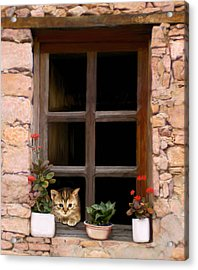 Tuscan Kitten In The Window Acrylic Print by Bob Nolin