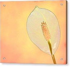 Tuscan Lily 2 Acrylic Print by Michael Taggart II