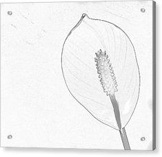 Tuscan Lily 3 Acrylic Print by Michael Taggart II