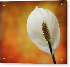 Tuscan Lily Acrylic Print by Michael Taggart II
