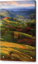 Tuscany, Italian Wineyards  Acrylic Print
