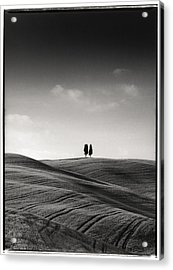 Tuscany Twin Cypresses Acrylic Print by Michael Hudson