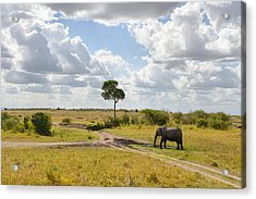 Tusker Scape Acrylic Print