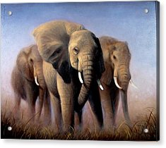 Tusks Acrylic Print