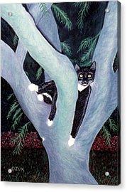 Tuxedo Cat In Mimosa Tree Acrylic Print