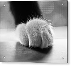 Tuxedo Cat Paw Black And White Acrylic Print