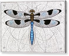 Twelve Spotted Skimmer Acrylic Print