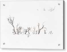 Twigs In Snow Acrylic Print