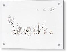 Twigs In Snow Acrylic Print