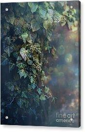 Twilight And Shadow Acrylic Print