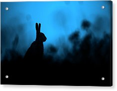 Twilight Hare Acrylic Print