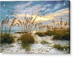 Twilight Sea Oats Acrylic Print by Steven Sparks
