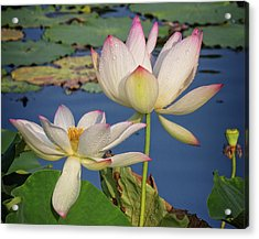 Acrylic Print featuring the photograph Twin Blooms by Robert Pilkington