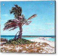 Twin Cove Palm Acrylic Print