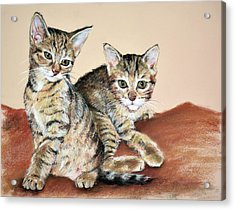 Twin Kittens Acrylic Print by Christopher Reid