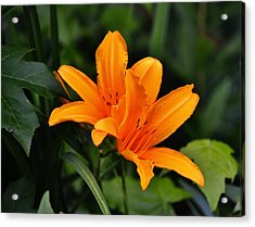 Twin Lillies Acrylic Print