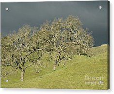 Twin Oaks Acrylic Print