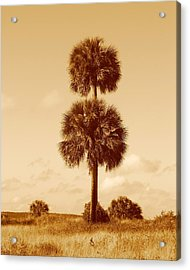 Acrylic Print featuring the photograph Twin Palms by Peg Urban