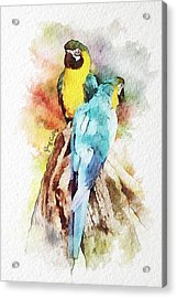 Twin Parrots Acrylic Print by Greg Collins
