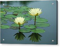 Twin Reflections Acrylic Print