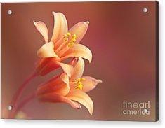 Twin Yucca Flowers Acrylic Print