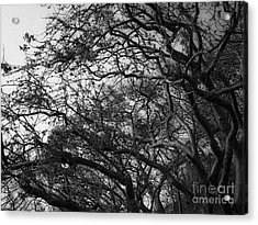 Twirling Branches Acrylic Print