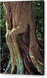 Twisted Arbutus Tree Acrylic Print
