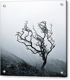 Twisted Acrylic Print by Dave Bowman