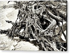 Twisted Driftwood Acrylic Print