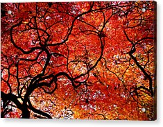 Twisted Red Acrylic Print