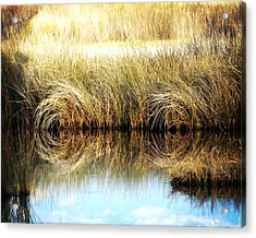 Twisted Reeds Acrylic Print by Marty Koch
