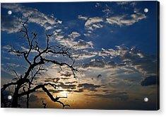 Twisted Sunset Acrylic Print by Karl Manteuffel