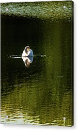 Acrylic Print featuring the photograph Twisted Swan by Onyonet  Photo Studios