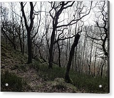 Twisted Woods Acrylic Print