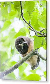 Twisting For A Better View Acrylic Print by Tim Grams