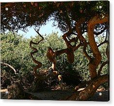 Twisty Tree Acrylic Print