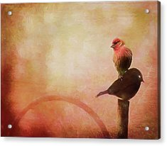 Two Birds In The Mist Acrylic Print